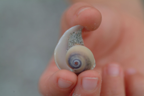young hand holding shell